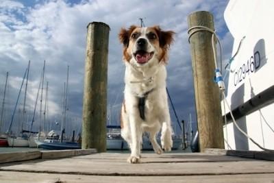 Bootsurlaub mit Hund