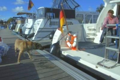 Yacht mieten mit Hund